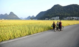 People pass by a rice field in Anlong County, Guizhou Province